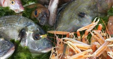 pesce-fresco.jpg